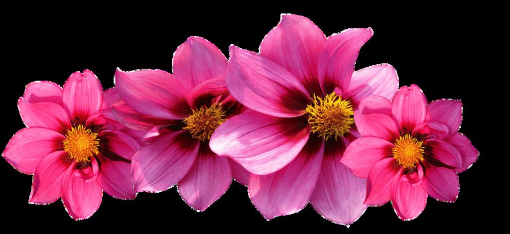 10 bonnes raisons d'utiliser les fleurs de Bach_blog_betilami