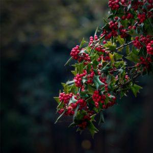 les 38 fleurs de Bach_blog_betilami