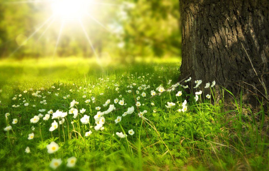 la trousse aromathérapie de votre été