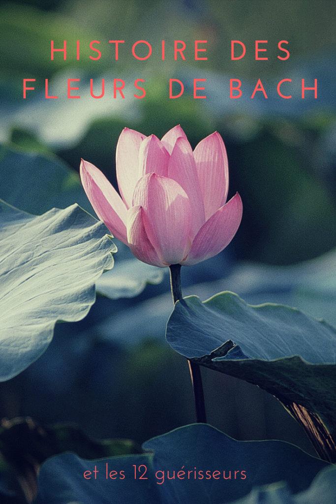 L'histoire des fleurs de Bach-blog.betilami